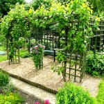 Пергола для винограда — особенности строения
