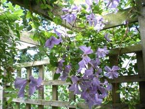 Пергола с цветами и растениями